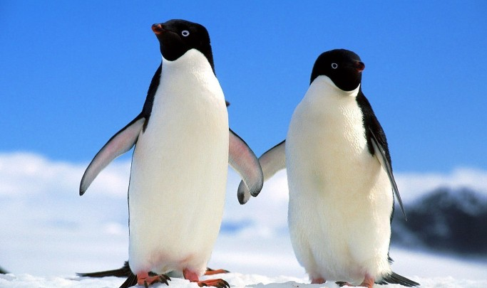 penguins_holding_hands_1600x1200